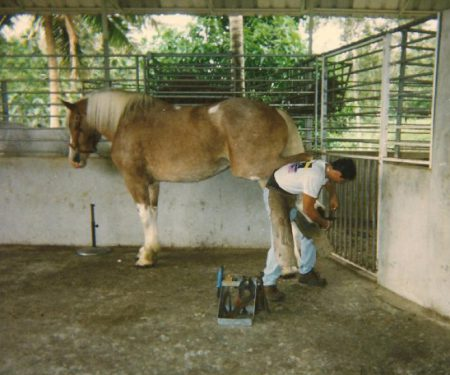 Julio did it all - he was a farrior specializing with Clydesdales in Puerto Rico.